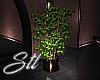 Contempo Potted Plant