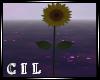 FLOWER /SUNFLOWER