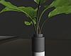 Plant Minimal