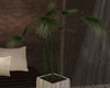 LKC Pottet Plant