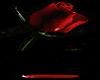 *(A) Rose Bloodlet