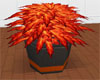 Autumn Fire Potted Plant