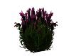 Sizeable Purple Flowers