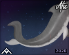 Shark | Tail