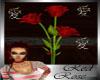 (TP)~Red Rose~