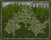 ⚡ Cedar Tree