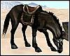 Stock Horse