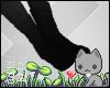 A  Black Socks