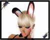Bunny Ears-Coral Luv