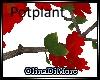 (OD) Potplant