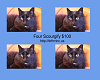 Scourgify (4)