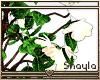 ~S~ Ghost Flowers