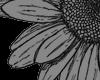 Fr. Sun Flower