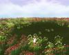 Spring Fields Bundle