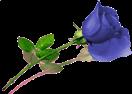 sticker_1007781_28427085