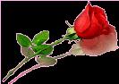 Etiqueta_9275561_13367978